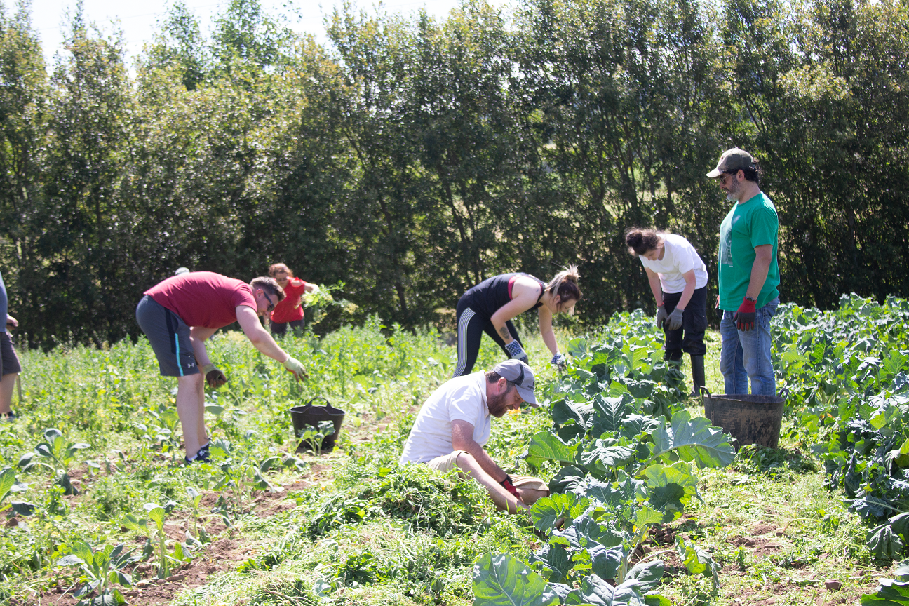 corporate volunteers cyrenians farm
